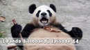 Panda Billboard Episode 64 iPanda