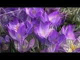Mariage d'Amour -Поль де Сенневиль исп. Ричард Клайдерман