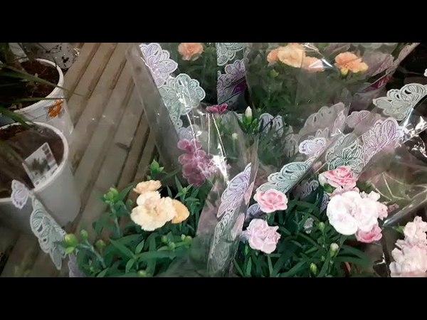 Орхидеи в Леруа Мерлен.Интересный выбор расцветок на 16 мая.