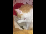 Котик – Кузя