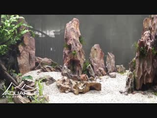 Comment faire un aquarium en aquascaping Dragon Scape