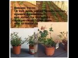 Agri-Seeds Factor стикер для роста растений