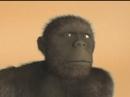 М-Ф Всемирная история = Древний человек. История.