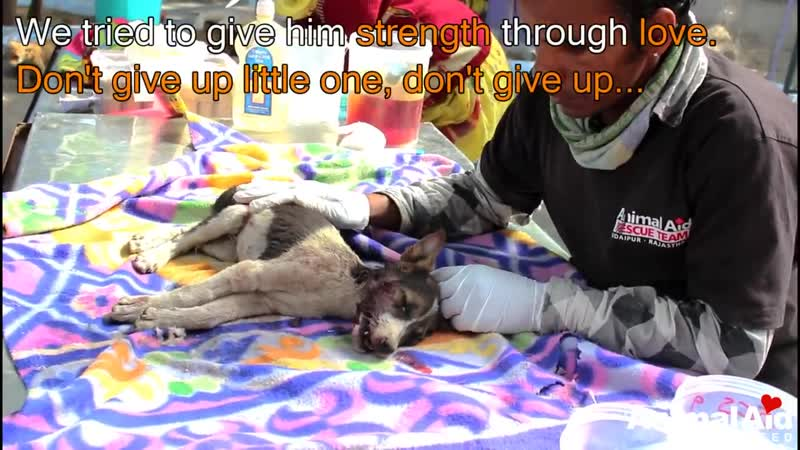 Severe head injury rescue of dying puppy (1)