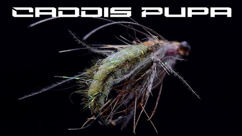 Fly Tying Caddis Pupa - AP Fly Tying