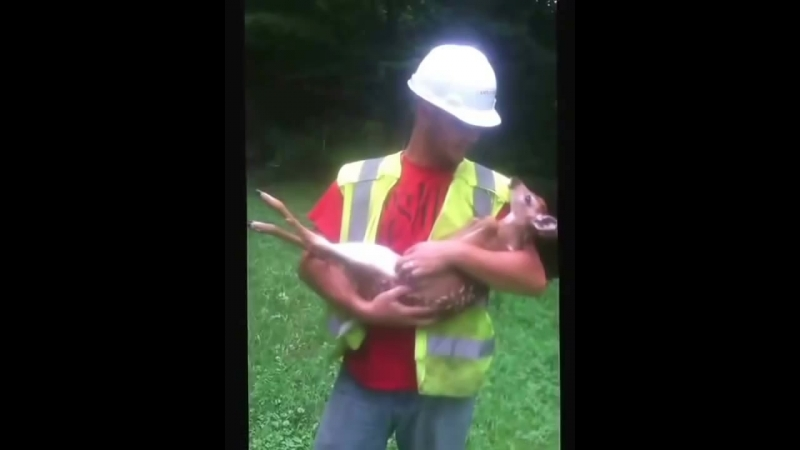 Spoiled Baby Deer wont let city worker put it down without crying