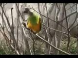МОИ ЗАБАВНЫЕ ЖИВОТНЫЕ Дрессированный попугай Смешные и прикольные животные