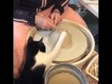 Котик-помощник