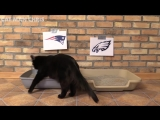Black Cat Predicts Super Bowl 2018 WINNERS