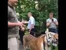 Конор и тигр