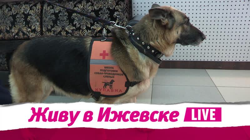Живу в Ижевске 14.11.2018