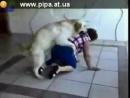 собака поимела бабульку