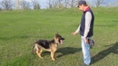 дресировкаБерта 5 мес щенок немецкой овчарки.