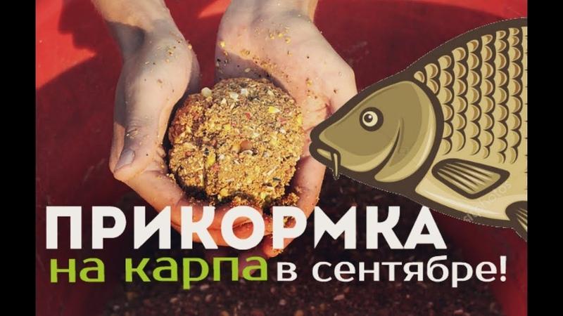 Эта прикормка для карпа творит чудеса в сентябре Прикормка в сентябре своими руками