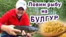 Приехали ловить леща а поймали много крупного белого амура на булгур Секрет рыбалки на амура