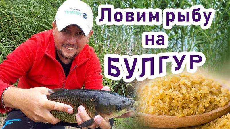 Приехали ловить леща, а поймали много крупного белого амура на булгур! Секрет рыбалки на амура!