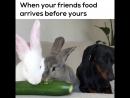 Когда друзьям еду принесли раньше, чем вам