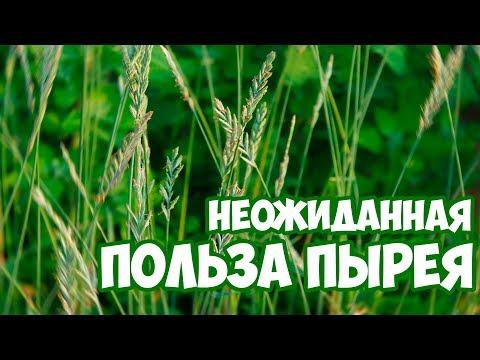 ПЫРЕЙ - полезные свойства 🌱 Сад и огород 🌱 Здоровье