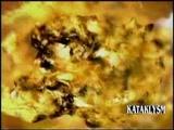 kataklysm - the road to devastation