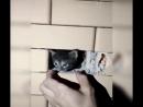 Чеченцы спасли замурованного котёнка