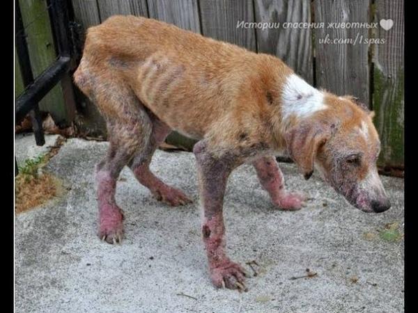 К несчастной и больной собаке многие боялись приблизиться, а те, кто приближался, давали ей пенка.
