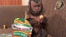 Capuchin Monkey Tells You How Much He LOVES His Snack