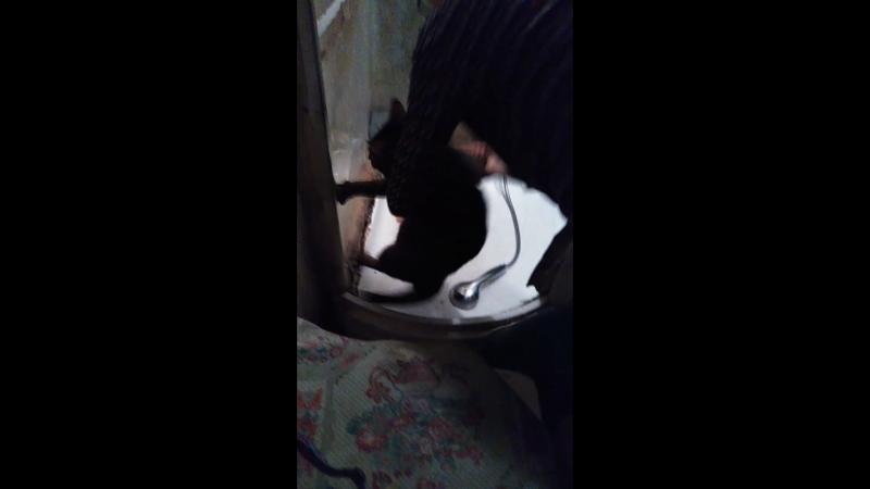 Помывка кота