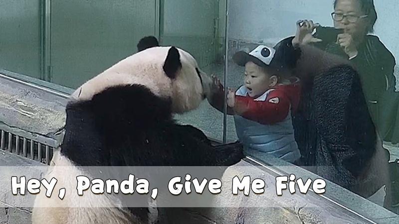 Hey Panda Give Me Five iPanda