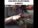 Котик вне закона
