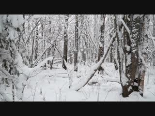 Как пермские охотники спасли заблудившихся в лесу детей