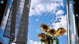 Летели облака - Алина Орлова , монтаж ролика Векшин Алексей г .Тольятти