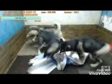 XiaoYing_Video_1521359270579.mp4
