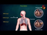 Macrolides Detailed USMLE Pharmacology Animated - Mechanism of action , Kinetics , Resistance