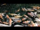 Никита кормит рыбок. Океанариум в Адлере. Сочи 2018.