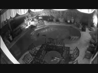В Техасе еноты пробрались в дом и искупались в бассейне