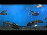 Видео-релаксация от Избариума. Рыбки в аквариуме. Relax