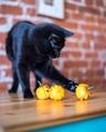 Святые тыквы, сегодня же Хеллоуин!