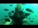Кормим рыбок на глубине 10 метров Черное море м. Меганом