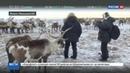 Новости на Россия 24 • Сибирская язва угроза не отступает