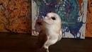 Сова для съемок. Сова сипуха белая. Чем полезны совы?
