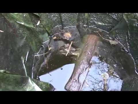 Что оказалось на дне пруда... Осушение пруда, водоем-пруд превращается в ...