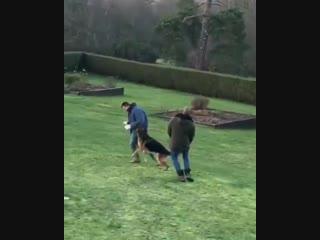 Джон Терри и собаки