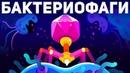 Самое смертоносное существо на планете Земля Бактериофаг Kurzgesagt на русском