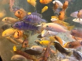 my.goldfish.shop video