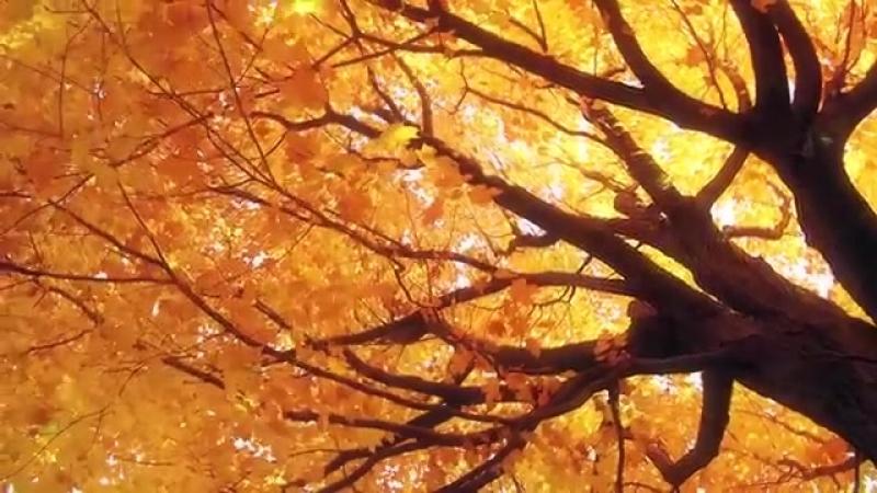 Осенний лес .Фортепианная музыка-красивые Осенние цвета листьев
