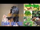 Top 7 Thảo Dược Trị Rụng Tóc Và Chăm Sóc Tóc Hàng Đầu Hiện Nay Mẹo Vặt Và khám Phá