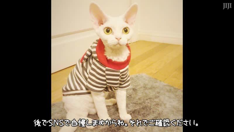 151018 FM Date CFA CAT SHOW