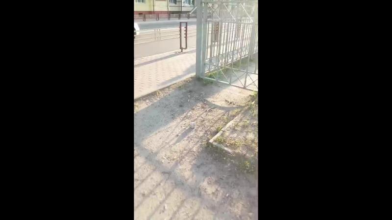 Максим Подлипенко - Live