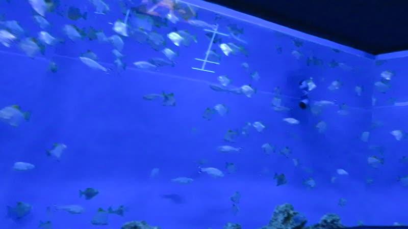 Океанариум часть 1