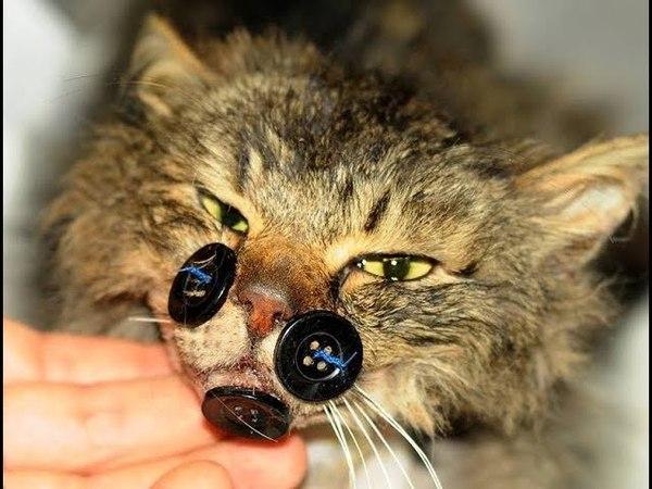 «Пришейте мне счастье, крепко-накрепко…» История кота Киш-Миша, который всё преодолел!
